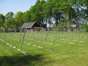 verhuizen wijnveld