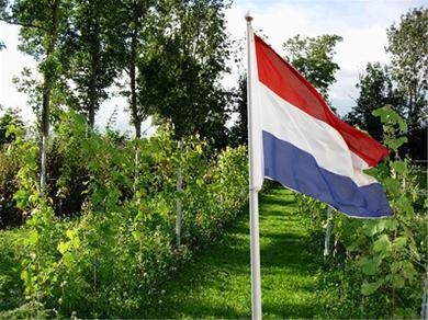 Open Dag Nederlandse Wijngaarden 2012