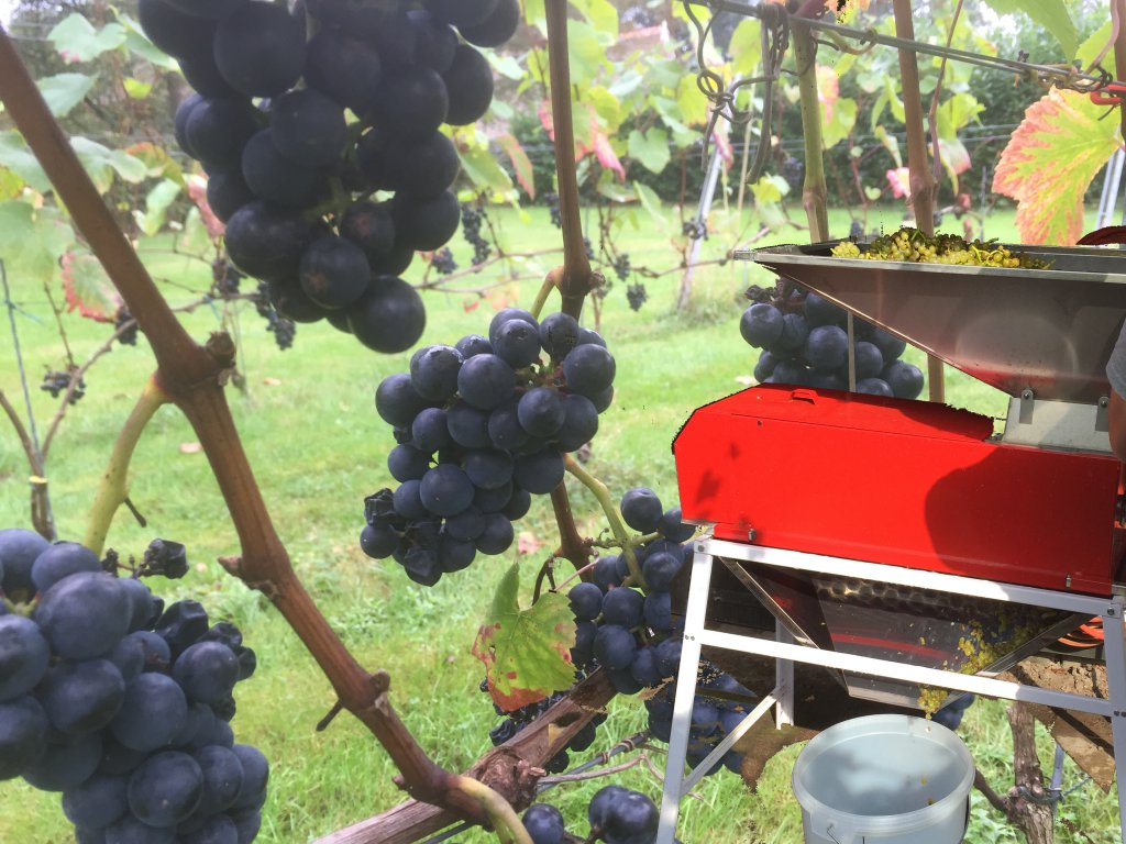 oogsttijd