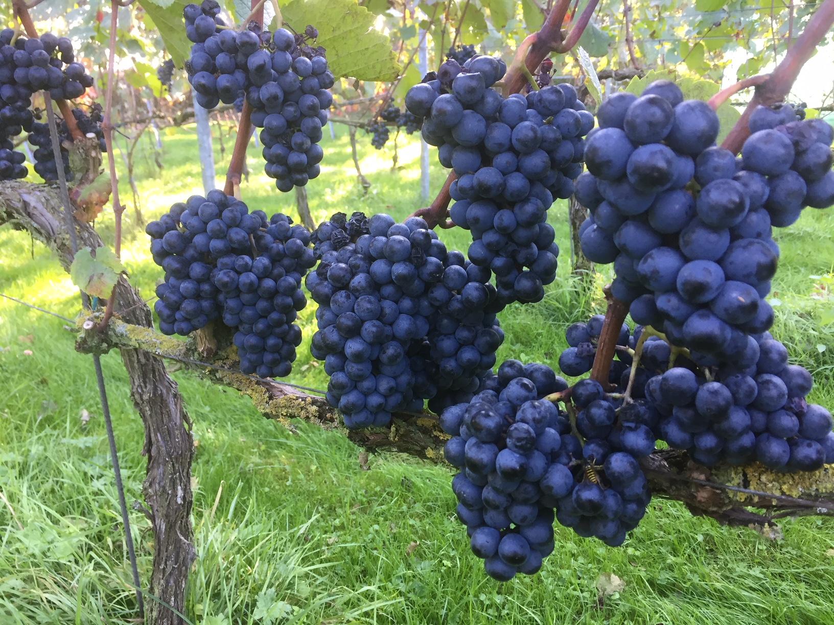 wijngaard-kalenberg