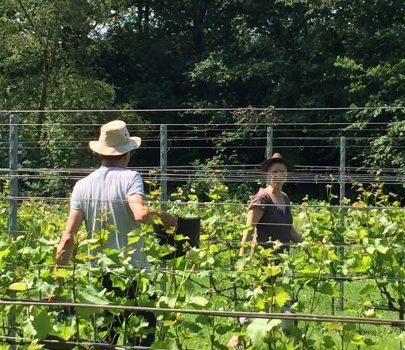 wijngaarden Noord-Nederland